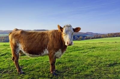 $80million Tasmanian dairy factory officially opens at Smithton