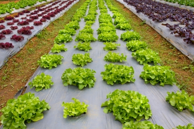 Veggie grower Houston's Farm receives $250,000 grant from Tasmanian Government