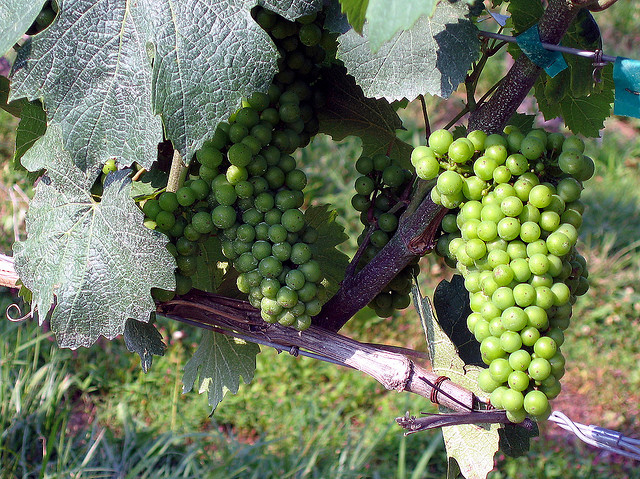 Tasmanian wine producers receive boost from Government funding