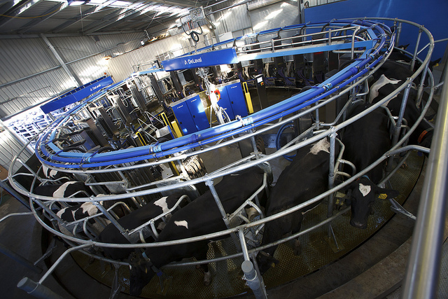 Robotic milking machines offer glimpse of dairy industry future
