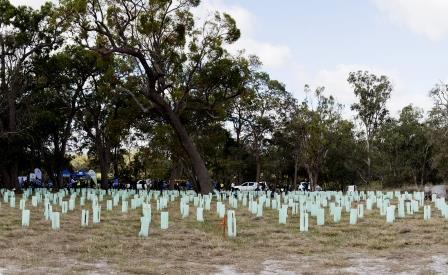 Image credit: www.greeningaustralia.org.au
