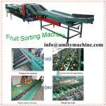 Automatic Fruit Sorting Machine