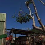 Roebuck Tree Service